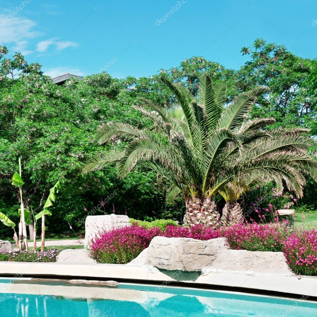 palmiers et fleurs autour de la piscine en plein air photographie alinamd 28512169. Black Bedroom Furniture Sets. Home Design Ideas