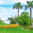 Tropical palm trees in a beautiful park — Stock Photo
