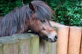 Ponies and wooden fence — Stockfoto