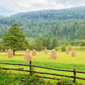 Haystacks in the mountain valley — Stock Photo