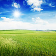 Beautiful sunset on spring field — Stock Photo #29958625