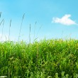 Meadow and beautiful blue sky — Stock Photo