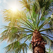 Palm tree on background of blue sky — Stock Photo