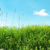 Louka a krásná modrá obloha — Stock fotografie