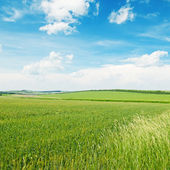 Field and blue cloudy sky — Stock Photo