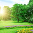 Sunrise in beautiful summer park — Stock Photo
