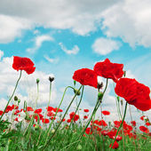 Poppies and cloudy sky — Stock Photo