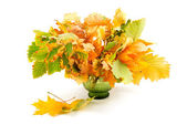 Composition of autumn leaves isolated on white background — Stock Photo