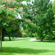 Summer park with beautiful green lawns — Stock Photo #32691807