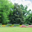Blossoming flowerbeds in the park — Stock Photo #32731529