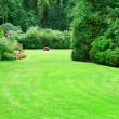 Summer park with beautiful green lawns — Stock Photo #34116907