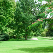 Summer park with beautiful green lawns — Stock Photo #34117029