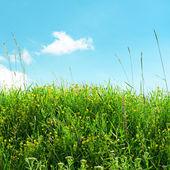 Wielobarwny trawa łąka i niebieski niebo — Zdjęcie stockowe