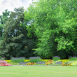 Blossoming flowerbeds in the park — Stockfoto