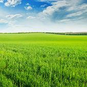 Campo de trigo verde y azul cielo nublado — Foto de Stock