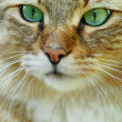 Portrait of a cat close-up — Stock Photo