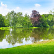 Scenic lake in the summer park — Photo