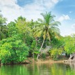 Tropical river with palm trees on  shores — Stock Photo