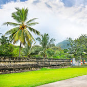 Lawn, coconut trees, cloudy day — Stock Photo