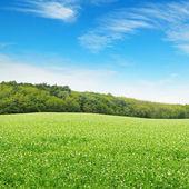 Beautiful flowering fields and beautiful clouds — Stock Photo