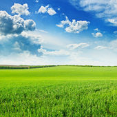 Green wheat field and blue cloudy sky — Stock Photo