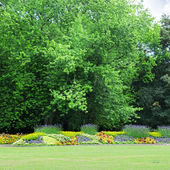 Flowerbeds in the park — Stock Photo