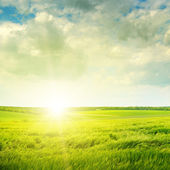 Beautiful sunset on green field — Stock fotografie