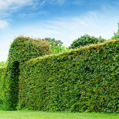 Green fence in a summer park and blue sky — Stock Photo