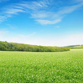 Fields and sky — Stock Photo
