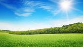 Salida del sol sobre un campo verde — Foto de Stock