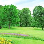郑树森 rpark 与草坪和花卉的花园 — 图库照片
