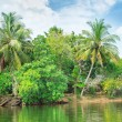 Stock Photo: Tropical river with palm trees on shores
