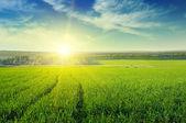 Krásný západ slunce na jaře pole — Stock fotografie