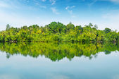 Mangroves and blue sky — Foto Stock