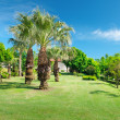 Tropical palm trees in a beautiful park — Stock Photo #40940109