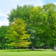 Summer park with beautiful green lawns — Stock Photo #41242817