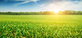 Sunrise over the corn field — Stock Photo