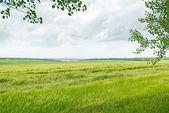 Feld und blau bewölktem himmel — Stockfoto