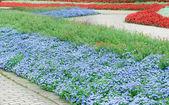 красивые цветочные клумбы и дорожки — Стоковое фото