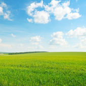 Green field and blue cloudy sky — Stock Photo