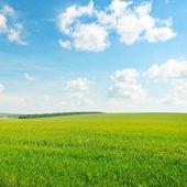 Gröna fält och blå mulen himmel — Stockfoto