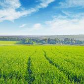 field and blue  sky — 图库照片