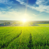 Beautiful sunset on spring field — Stock Photo