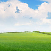 Beautiful wheat field and blue cloudy sky — Stock Photo