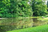 живописное озеро в парке летом — Стоковое фото