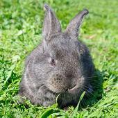 緑の草の背景上にリトルウサギ — ストック写真
