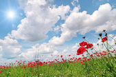 Field with poppies and sun on blue sky — Stock Photo