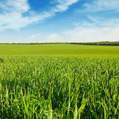 Meadow and blue sky — Stock Photo
