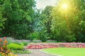восход солнца в красивый летний парк — Стоковое фото