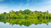 Mangroves on the bank of the river  — Stok fotoğraf